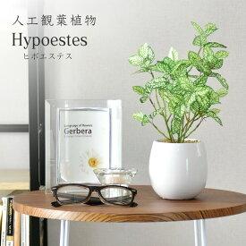 観葉植物 人工観葉植物 水やり不要 インテリアグリーン フェイクグリーン ヒポエステス