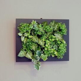 壁掛けグリーンフレーム シンゴジューム ブラック(光触媒)造花・観葉植物・インテリアグリーン・フェイクグリーン・人工観葉植物
