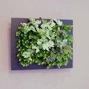 壁面グリーンフレーム フレッシュアイビー ブラック(光触媒)造花・観葉植物・インテリアグリーン