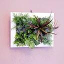 壁掛けグリーンフレーム ドラセナ ホワイト(光触媒)造花・観葉植物・インテリアグリーン