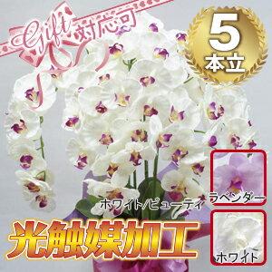 高級胡蝶蘭5本立 (光触媒)シルクフラワー・造花 胡蝶蘭 開店祝い 敬老の日 ギフト プレゼント