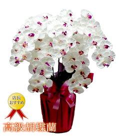 光触媒 胡蝶蘭 お祝い 造花 高級 5本立 シルクフラワー 開店祝い 新築祝い ギフト プレゼント
