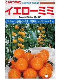 トマト カネコ交配・・・イエローミミ・・・<カネコのミニトマトです。 種のことならお任せグリーンデポ>