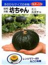 小型南瓜種  坊ちゃん  みかど協和のミニカボチャ品種です。 種のことならお任せグリーンデポ