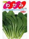小松菜 サカタ交配・・・わかみ・・・<サカタの小松菜です。 種のことならお任せグリーンデポ>