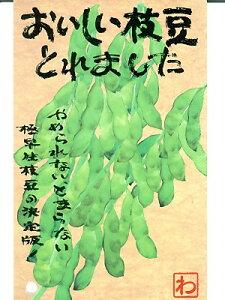 エダマメの種 おいしい枝豆とれました 渡辺農事 <渡辺農事の枝豆の種です。種のことならお任せグリーンデポ>