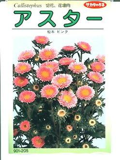 是翠菊种子Sakata Seed、松本粉红・・・<sakata的翠菊种子。假如是种的话绿色的仓库>