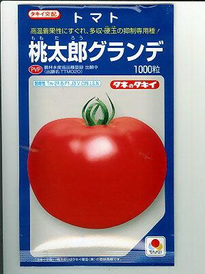 タキイ交配 桃太郎グランデ <タキイ種苗のトマト品種です。種の通販ならグリーンデポ>
