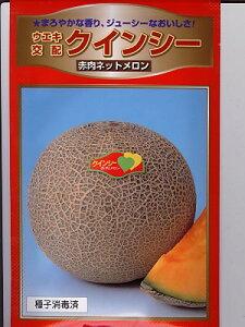 メロンの種 ウエキ交配 クインシーメロン  横浜植木のメロン品種です。種のことならお任せグリーンデポ