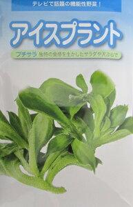 アイスプラント プチサラ  武蔵野種苗園のアイスプラント種子です。