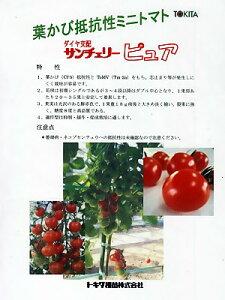 ミニトマト種 サンチェリーピュワ <トキタ種苗のミニトマト種です。種の通販ならグリーンデポ>