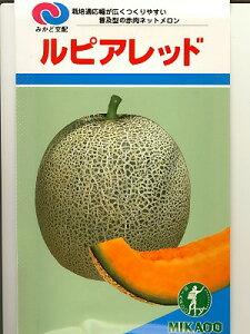 メロン種 みかど交配 ルピアレッド  みかど協和のメロン種子です。