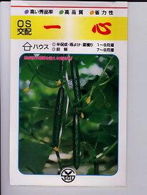 胡瓜種 OS交配 一心   埼玉原種育成会の胡瓜品種です。