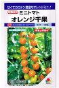 タキイ交配 オレンジ千果  タキイ種苗のミニトマト種です。