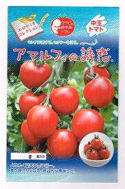 アマルフィの誘惑 パイオニアエコサイエンスの中玉トマト種です。マウロの地中海トマト