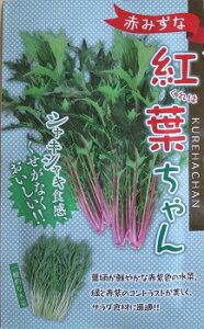 紅葉ちゃん 野原種苗の赤水菜種