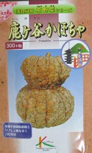 鹿ケ谷かぼちゃ タカヤマシードのカボチャ種です。