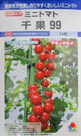 ミニトマト種 タキイ交配 千果99  タキイ種苗のミニトマト品種。