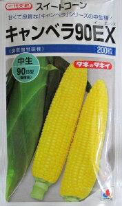 トウモロコシ タキイ交配 キャンベラ90EX タキイ種苗のトウモロコシ品種です。