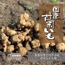 【送料無料/あす楽】土付き国産生菊芋 2kg【5の倍数の日ポイント5倍/掘り立てを出荷/プレゼント】