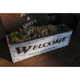 多肉植物寄せ植えに最適!JUNKなウッドプランター(L)【WEL-WH】当店オリジナル
