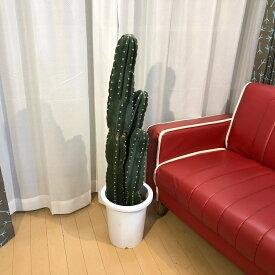 サボテンA2(3本立) 現物販売 送料無料 観葉植物 南国風 インテリア