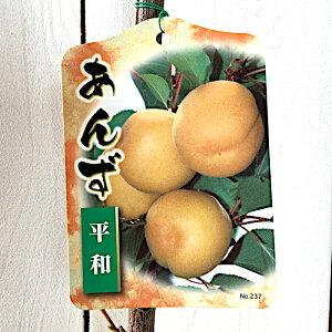 アンズ 苗木 平和 12cmポット苗 あんず 苗 杏 gv