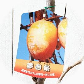 渋柿 苗木 夢西条 12cmロングポット苗 ゆめさいじょう カキ 苗 かき gv