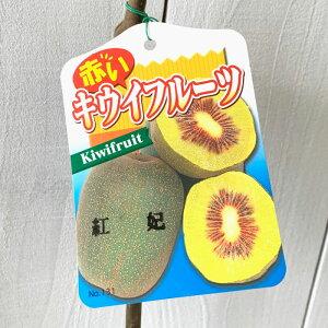 キウイ 苗木 紅妃 (赤実メス) 12cmポット苗 こうひ キウイ 苗 キウイフルーツ gv