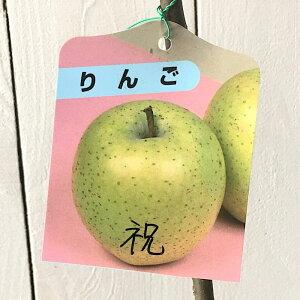 リンゴ 苗木 祝 13.5cmポット苗 いわい りんご 苗 林檎 gv