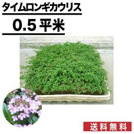 【ポイント2倍】 【8枚/約0.5平米】マット マットプランツ タイムロンギカウリス 25×25cm 植物 お花 ハーブ