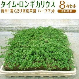 マット マットプランツ / タイム・ロンギカウリス / 8枚セット / 25×25cm 植物