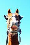 牧場オリジナル馬ポストカード