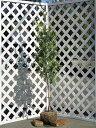 【1年間枯れ保証】【生垣樹木】ギンバイカ 1.2m露地 【あす楽対応】