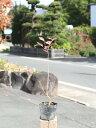 サルスベリ 0.5m10.5cmポット 1本【1年間枯れ保証】【夏に花が咲く木】