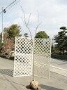 サクラ/河津桜 2.0m露地 1本【1年間枯れ保証】【シンボルツリー落葉】