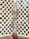 【1年間枯れ保証】【山林苗木】センペルセコイア 1.0m露地 【あす楽対応】