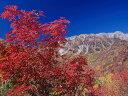 【1年間枯れ保証】【街路樹&公園樹】ナナカマド 0.3m 【あす楽対応】