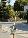 ホオノキ 0.2m10.5cmポット 1本【1年間枯れ保証】【山林苗木】