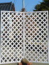 アメリカハナズオウ/シルバークラウド 1.5m露地 1本【1年間枯れ保証】【春に花が咲く木】