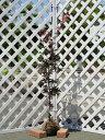 ノムラモミジ単木 1.2m露地 1本【1年間枯れ保証】【シンボルツリー落葉】