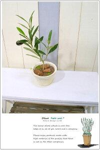 フェイクグリーン ミニシャビー鉢オリーブ 造花 インテリアグリーン 人工観葉植物 鉢植え 北欧 雑貨 おしゃれ かわいい 枝 壁