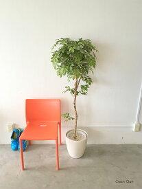 フェイクグリーン 大型 人工観葉植物 マウンテンアッシュトピアリー高さ1.5m 大型 観葉 植物 光触媒付 人工植物 インテリアグリーン インテリア おしゃれ プランター イミテーショングリーン 造花 鉢植え リアル 幹 枝