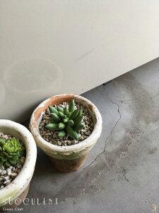 ミニシャビー鉢に多肉植物4フロストグリーン色シャビー鉢ペイントフェイクグリーンシャビー鉢造花人工観葉植物インテリアグリーン光触媒付ミッドセンチュリースタイルミニ観葉植物