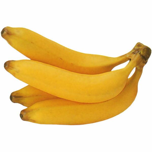 【食品サンプル】バナナ四本房・全長22cm・2房セット(実芭蕉/果物/フルーツ)(フェイクフード/食品模型/オブジェ)(ディスプレイ/アレンジ/装飾/花材)