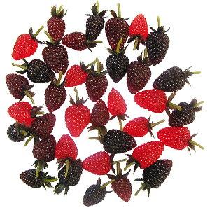 【食品サンプル】 ミニ ソフト ラズベリー 全長3〜3.5cm 144個セット 1袋36個×4袋 キイチゴ 西洋木苺 果物 フルーツ フェイクフード 装飾