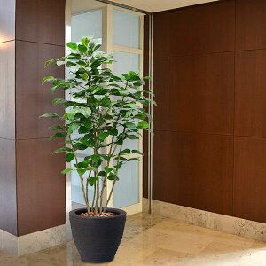 【人工植物】 ボダイジュ全高3.0m【★配送制限有り】 菩提樹 フェイクグリーン インドアグリーン 造花 人工樹木 人工観葉植物