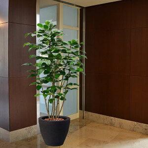 【人工植物】 ボダイジュ全高2.1m【★配送制限有り】 菩提樹 フェイクグリーン インドアグリーン 造花 人工樹木 人工観葉植物