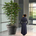 【人工植物】全高2.6m×全幅1.5m大型ベンジャミン・ワイド・ロング(フェイクグリーン/インドアグリーン/造花・観葉植物/人工樹木/人工観葉植物)