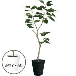 ボダイジュ 人工観葉植物 全高1.2m(菩提樹 人工樹木 造花 インテリアグリーン フェイクグリーン)